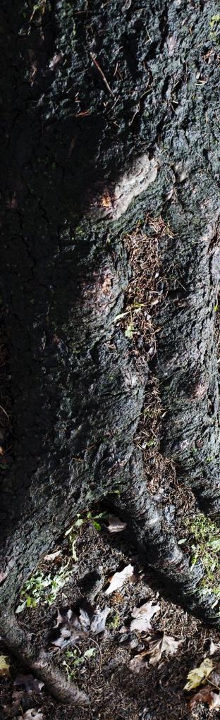 SF21_Root_flat